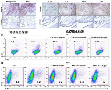 免疫細胞分化.jpg