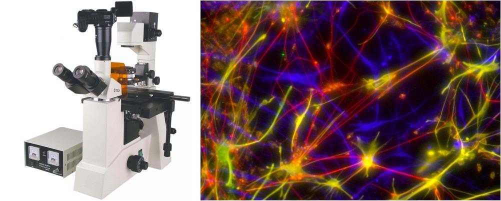 荧光显微镜.jpg