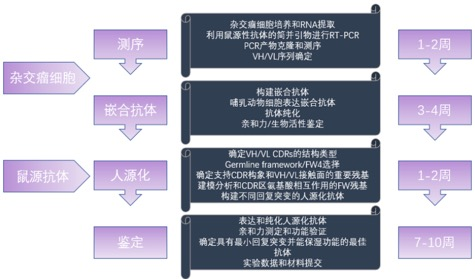 抗體流程.jpg